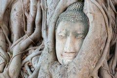 Каменная голова Будды окружила корнями ` s дерева Стоковые Изображения