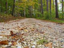 Каменная дорога в лесе Стоковое фото RF