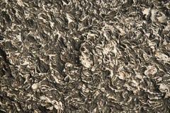 Каменная естественная текстурированная предпосылка Стоковые Изображения