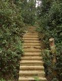 Каменная лестница в парке Стоковое Фото