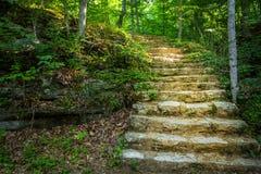 Каменная лестница через древесины стоковое изображение