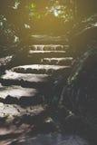 каменная лестница, stairstep, лестница в парке Стоковые Фотографии RF