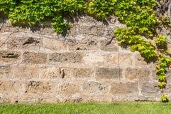 Каменная кирпичная стена с зеленым цветом выходит рамка Стоковые Фотографии RF