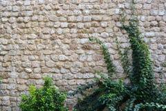 Каменная кирпичная стена Стоковая Фотография
