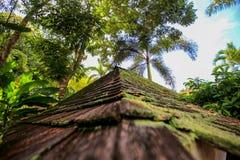 Каменная крыша пирамиды на зеленых джунглях Стоковое Изображение RF
