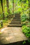 Каменная лестница в зеленом тропическом лесе как часть тропы Co Стоковое фото RF