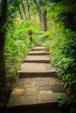 Каменная лестница в зеленом тропическом лесе как часть тропы Co Стоковое Изображение RF