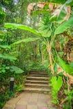 Каменная лестница в зеленом тропическом лесе как часть тропы Co Стоковые Изображения