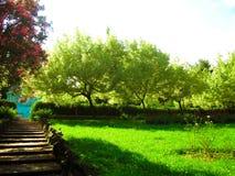Каменная лестница в итальянском парке города стоковая фотография rf