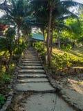 Каменная лестница окруженная растительностью стоковое изображение rf