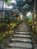 Каменная лестница окруженная растительностью стоковая фотография