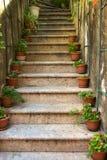 Каменная лестница с цветочными горшками стоковое изображение