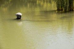 Каменная малая лампа в озере японец сада Стоковые Изображения