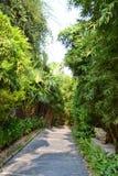 Каменная дорога в лесе стоковые фото