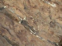 Каменная поверхность с некоторым белым грибком Стоковые Фотографии RF