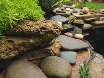 Каменная природа зеленого растения утеса сада Стоковые Фото