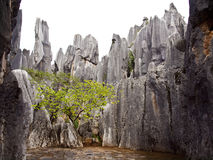 Каменная пуща Стоковые Фото