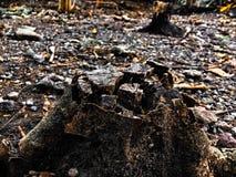 Каменная древесина Стоковые Изображения