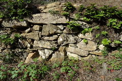 Каменная стена в лесе Стоковая Фотография