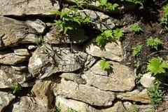 Каменная стена в лесе Стоковое Изображение