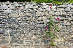 Каменная стена в Франции Стоковые Фотографии RF