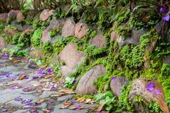 Каменная стена имеет мох Стоковое Изображение