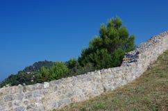 Каменная стена и сосна Стоковые Изображения