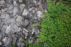 Каменная стена перерастанная с предпосылкой плюща Стоковые Изображения RF