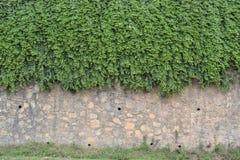 Каменная стена покрытая с цветком Стоковые Фото