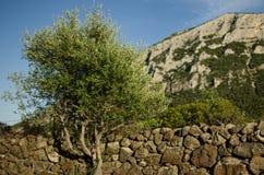 Каменная стена с деревом, Сардинией Стоковые Фотографии RF
