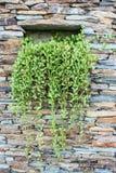 Каменная стена с деревом стоковые фото