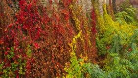 Каменная стена с заводами осени Стоковое Фото