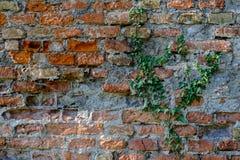 Каменная стена с предпосылкой плюща - природой Стоковая Фотография RF