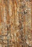 каменная текстура стоковые изображения rf