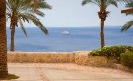 Каменная тропа с пальмами напротив моря с плавать Стоковые Фотографии RF