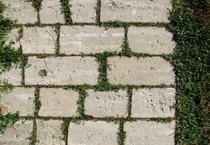 Каменная тропа с травой между блоками Стоковые Изображения RF