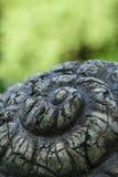 Каменная улитка панцыря стоковые фотографии rf