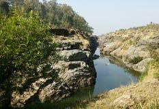 каменное дерево реки Стоковые Фотографии RF