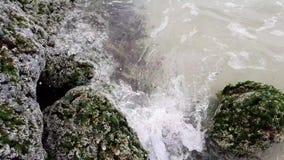 Каменное побережье Персидского залива покрыто с утесом раковины сток-видео