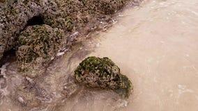 Каменное побережье Персидского залива покрыто с утесом раковины акции видеоматериалы