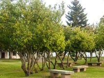 Каменные ветви на парке Стоковая Фотография