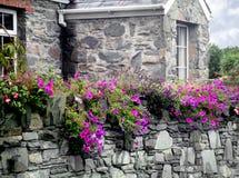 Каменные дом и стена покрытые с цветками стоковое изображение rf