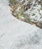 Каменные дерево и лишайник Стоковое Изображение RF
