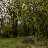 Каменные лестницы в лесе Стоковое Фото