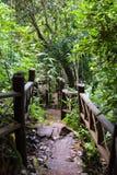 Каменные лестницы с деревянным рельсом руки в пуще Стоковая Фотография RF