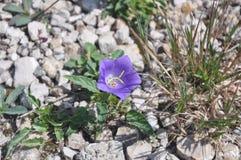 Каменные цветки Стоковое фото RF