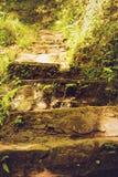 Каменные шаги в зеленый лес Стоковая Фотография RF