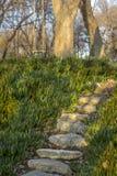 Каменные шаги в парк вокруг зеленых цветов стоковая фотография
