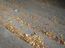 Каменные шаги в парк Стоковая Фотография RF