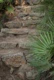 Каменные шаги в середине парка Стоковые Изображения